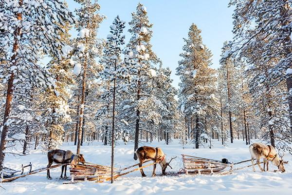 Nature - Hôtel Club Saaga 4* : Réveillon en Laponie ! Kittila Finlande