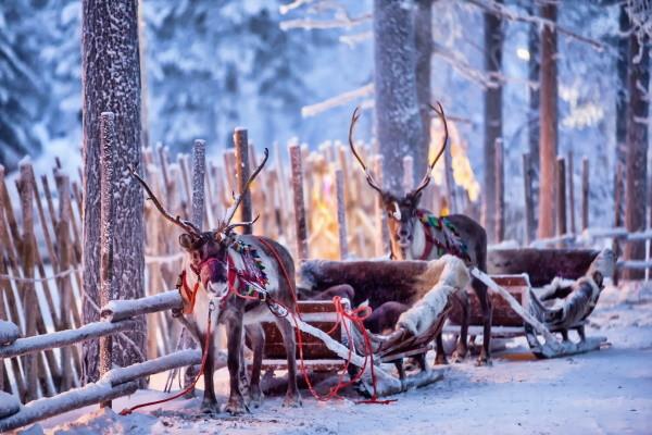 Nature - Hôtel Séjour Activités fêtes de fin d'année à l'hôtel Levi Spa 4* Kittila Finlande