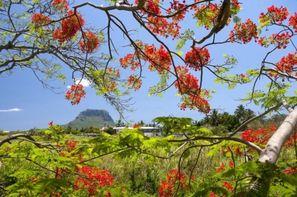 Séjour Ile Maurice - Hôtel Sea Villa Mauritius 3*