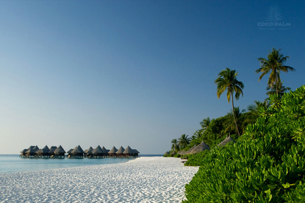 Plage - Hôtel Coco Palm Dhuni Kolhu 4* Male Maldives