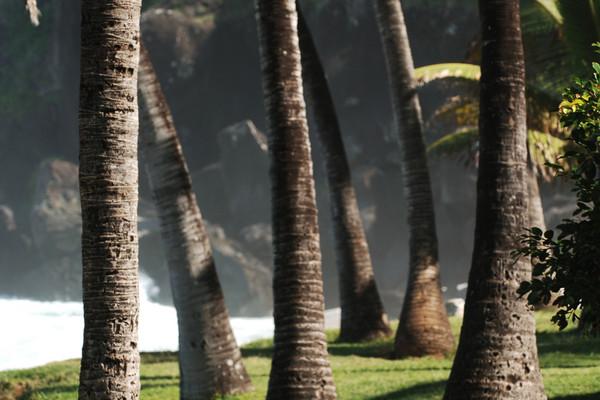(fictif) - Hôtel Palm Hotel & SPA 5* Saint Denis Reunion