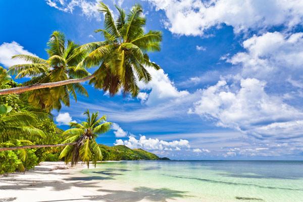 Plage - Hôtel Palm Beach 2* Praslin Seychelles