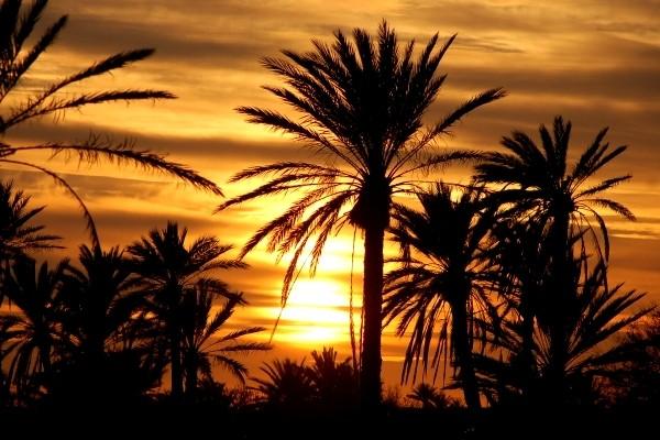 Nature - Club Jet Tours Aquaresort 4* Djerba Tunisie