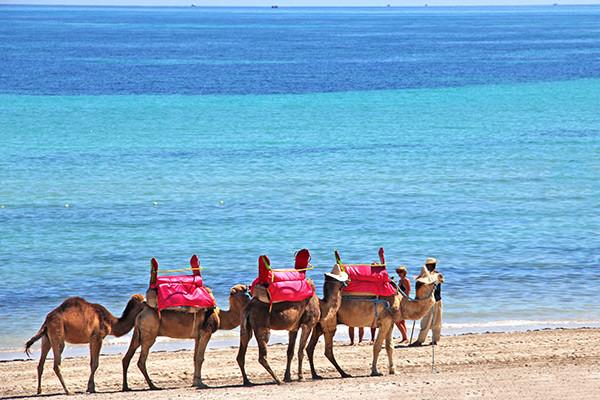 Séjour Djerba - Hôtel Holiday Beach