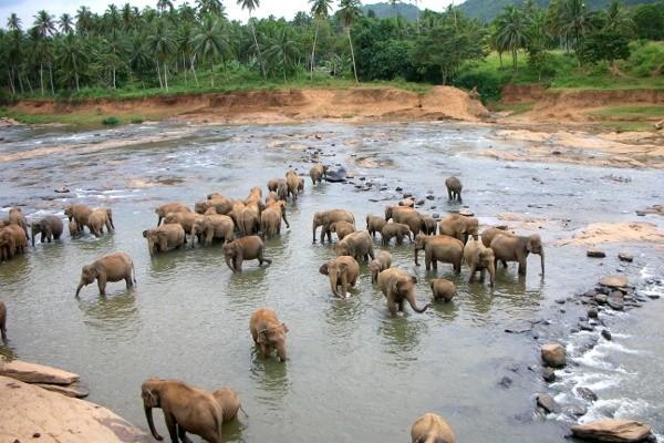 Photo n° 7 Circuit Merveilles du Sri Lanka