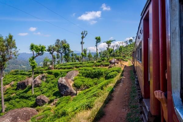 Photo n° 13 Combiné circuit et hôtel Sri Lanka Authentique 3* et Extension balnéaire
