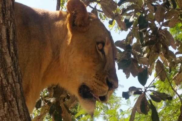 Circuit Lion de Fathala 3*