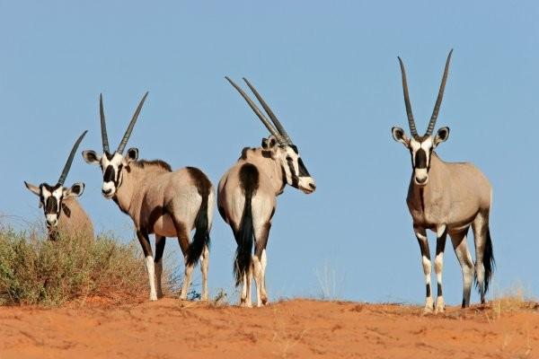 Circuit Merveilles d'Afrique du Sud