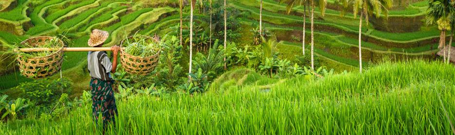sejour-indonesie